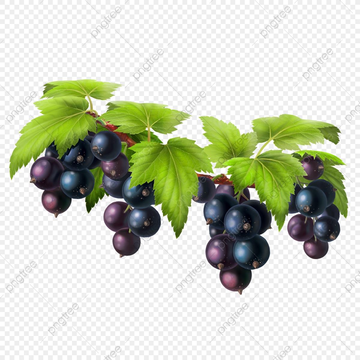 Black Currant On A Branch, Nature, Dessert, Tasty PNG Transparent.