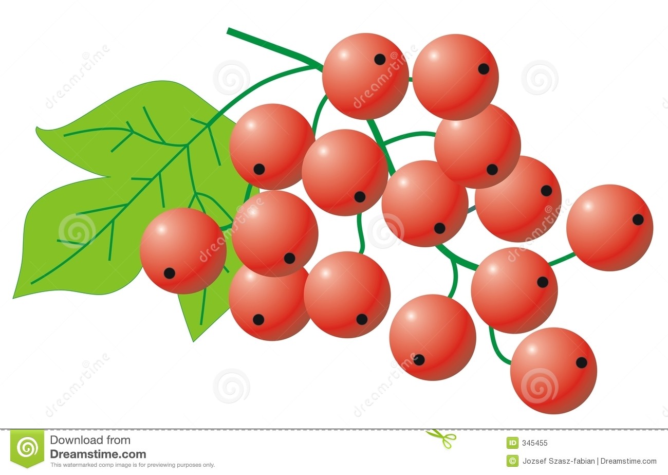 Red Currant Stock Illustrations.