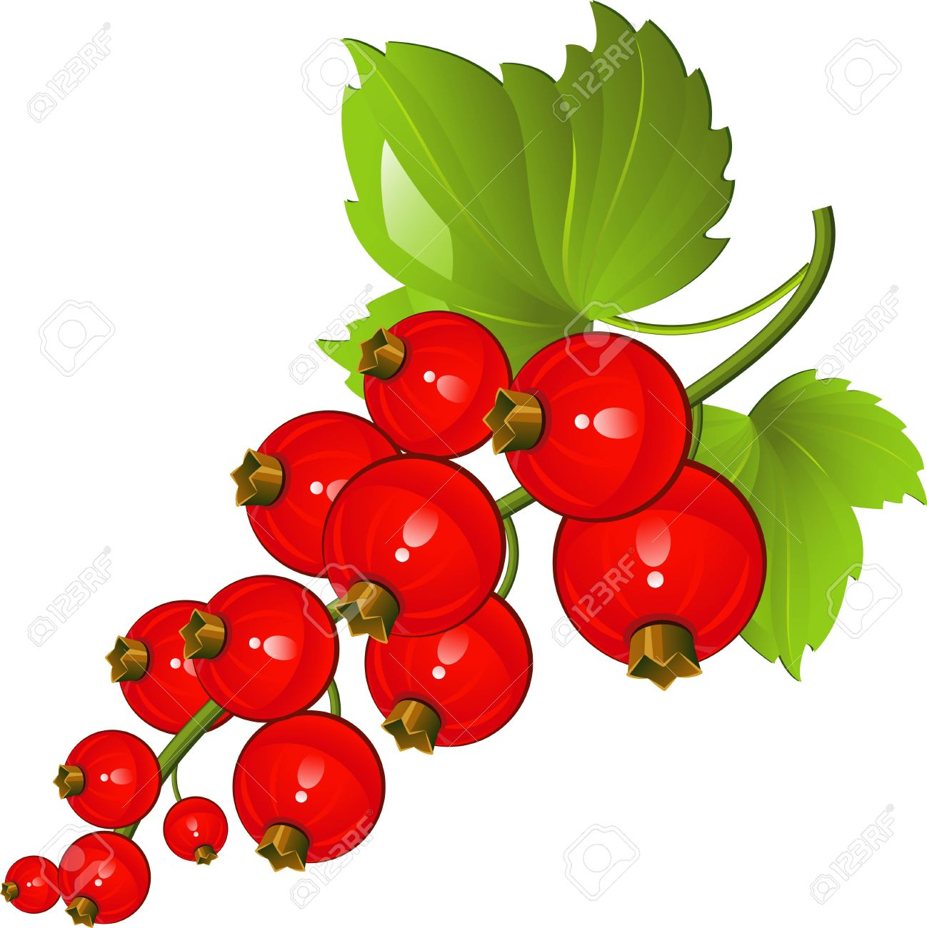Illustration Of Red Currants Over White. EPS 8 Royalty Free.
