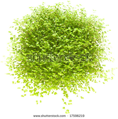 Pin Cushion Plant Stock Photos, Images, & Pictures.