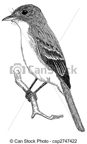 Clip Art of Alder Flycatcher Empidonax alnorum csp2747422.