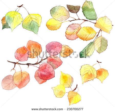 Alder Leaf Stock Photos, Royalty.