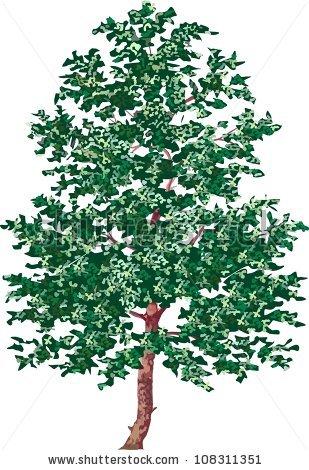 Alder tree clipart.