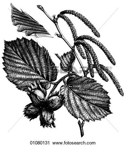 Clipart of Flora & Fauna.