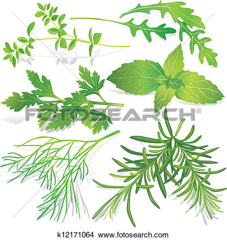 Clipart of Green meadow herbs silhouettes with k6575682.
