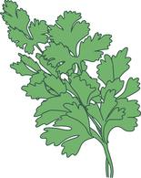 Herb clipart #14