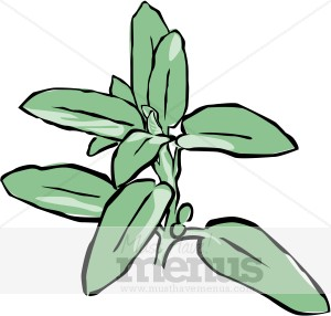 Herb Clipart & Herbs Graphics.