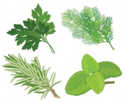 Herb clip art.