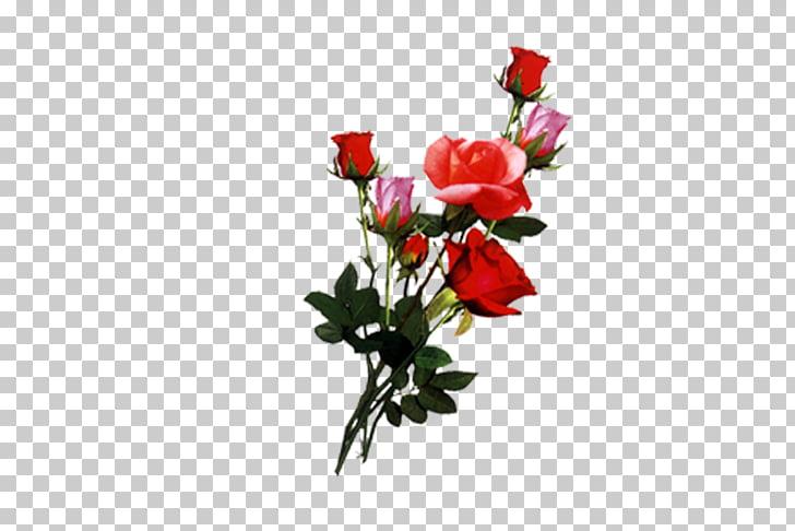 Cut flowers Garden roses Floral design, Photoshop PNG.