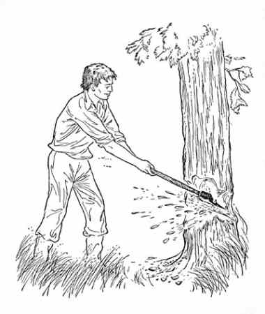 Cut down tree clipart blackand white.