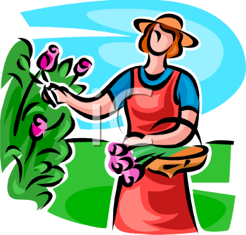 Lady Cutting Tulips in Her Garden.