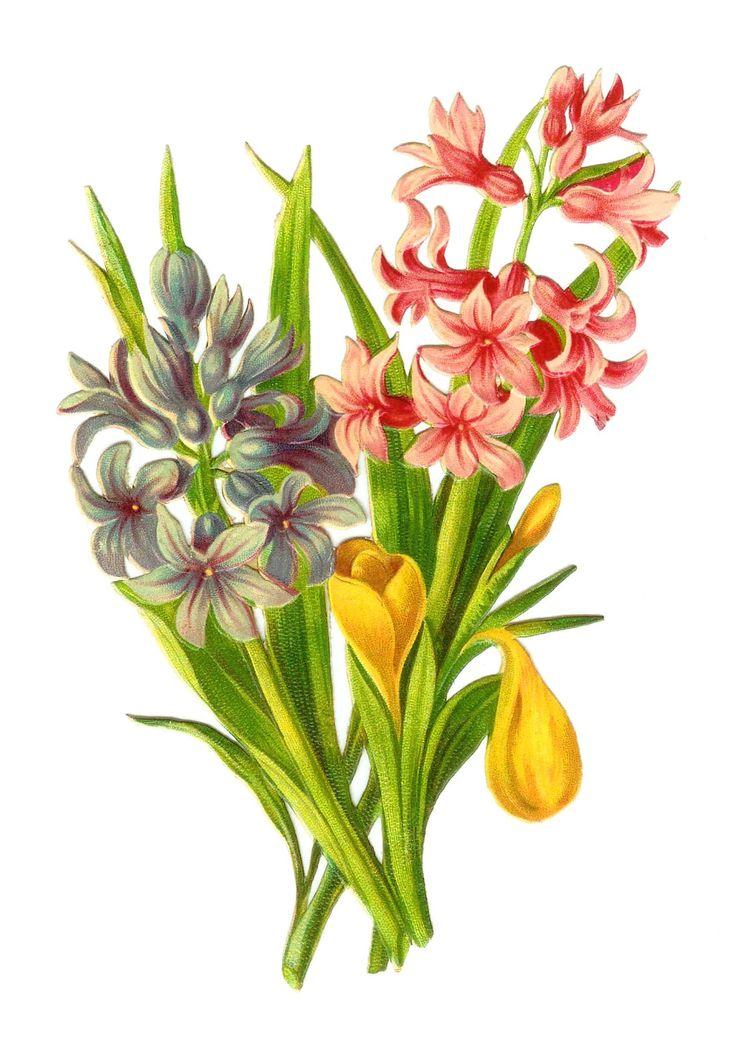 1000+ images about Vingtage Flowers Clipart on Pinterest.
