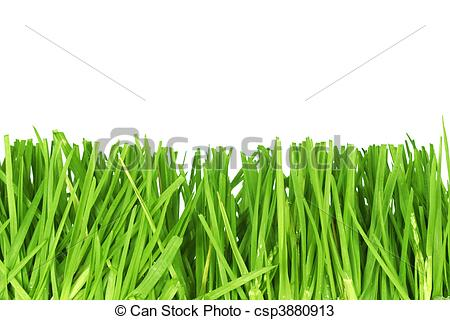 Cut The Grass Clipart.