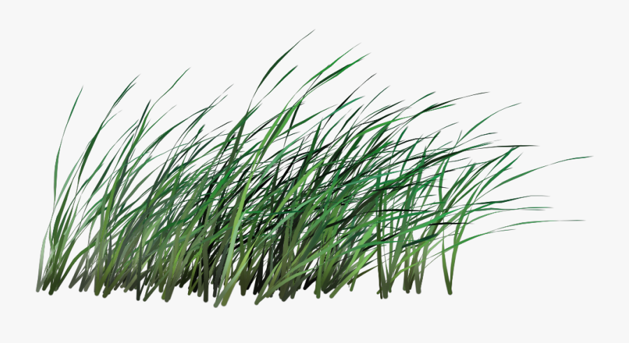 Transparent Blade Of Grass Clipart.