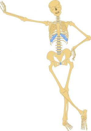 Human body skeleton clipart.