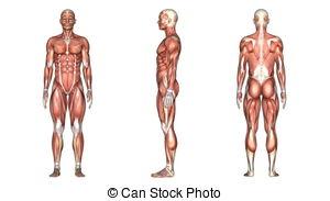 Body human Illustrations and Clip Art. 101,895 Body human royalty.