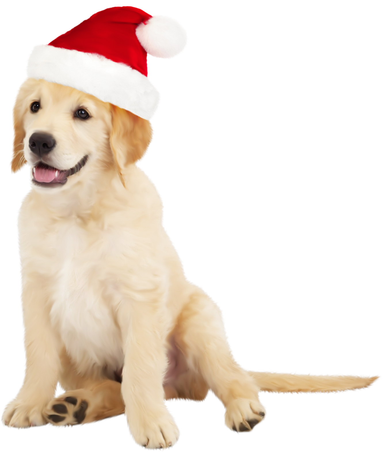 Cute Dog with Santa Hat PNG Clipart.