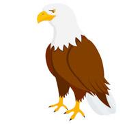 The Bald Eagle Clipart.