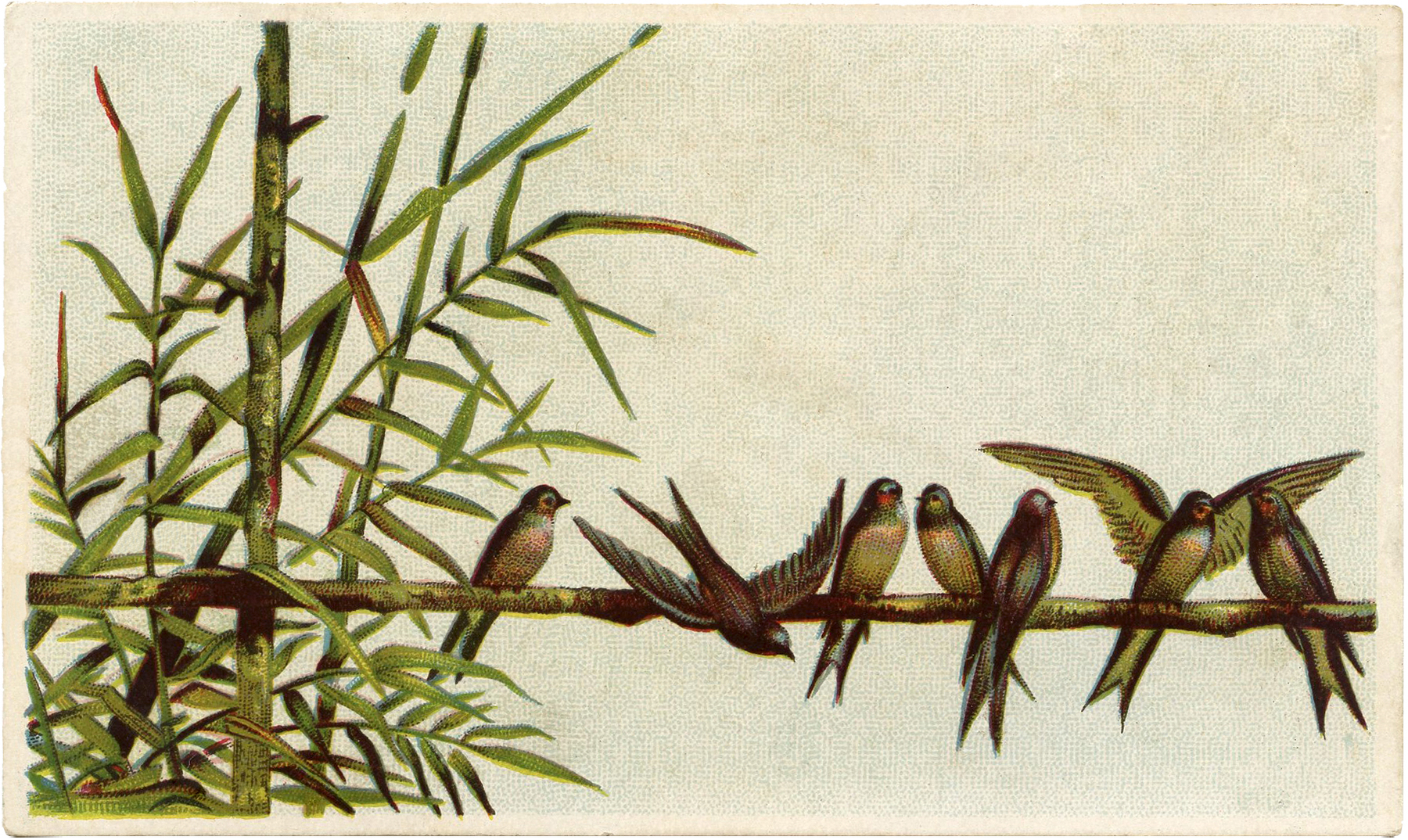 Cute Birds on Branch Clip Art!.