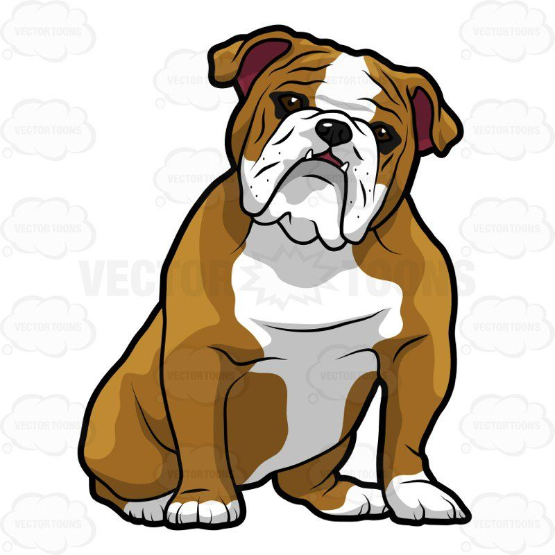 English Bulldog Sitting With Its Head Tilted To The Right 1.