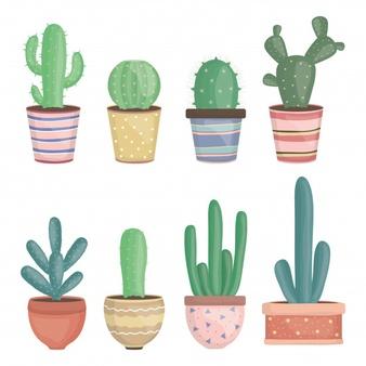 Cactus Vectors, Photos and PSD files.