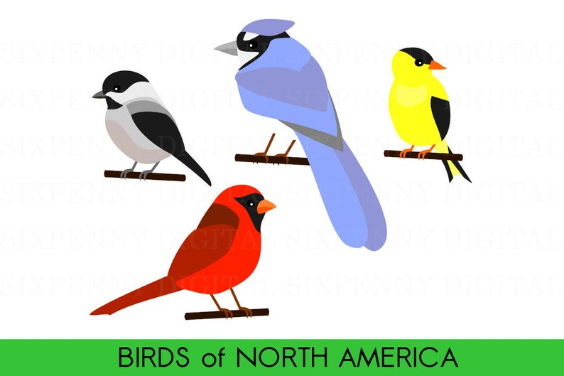 Cute Bird Clipart, Birds of North America, Cardinal Clipart, Blue Jay  Clipart, Digital Chickadee, Printable Goldfinch Clipart.