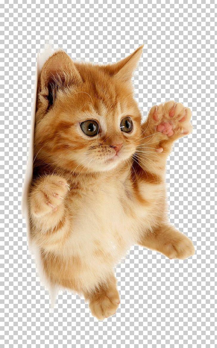 Cute Cat PNG, Clipart, Animal, Cat Clipart, Cute, Cute Clipart, Cute.