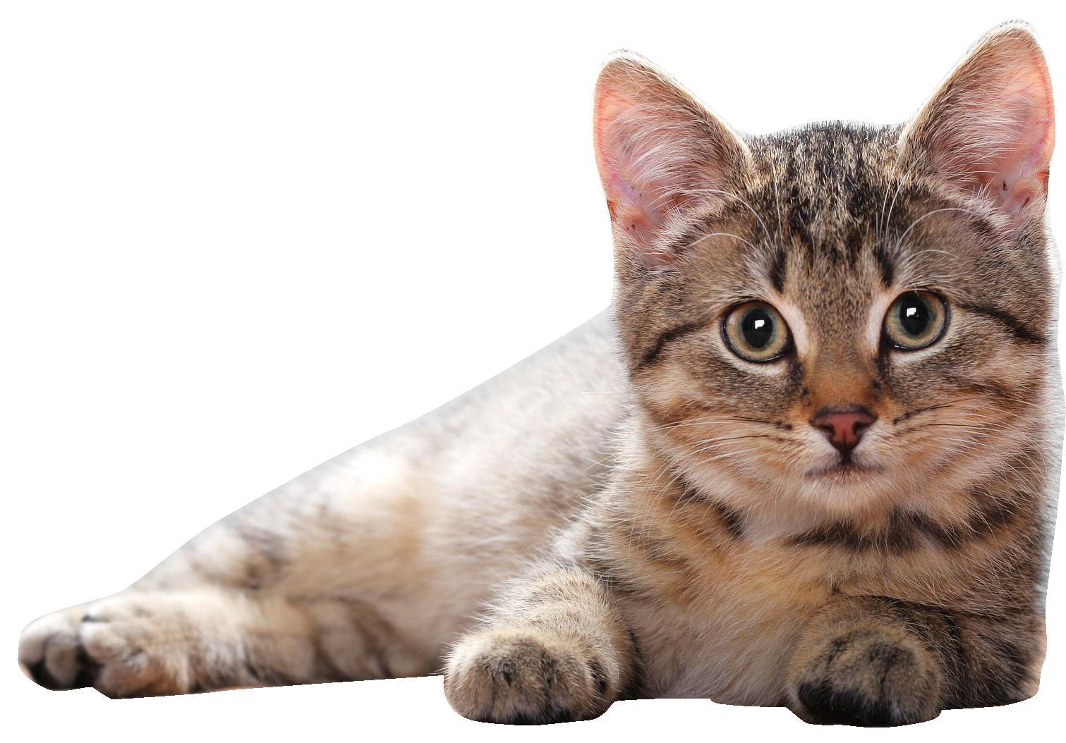 Cute Lying Cat Png.