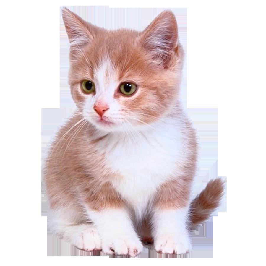 Bengal cat Kitten Puppy Dog Cuteness.
