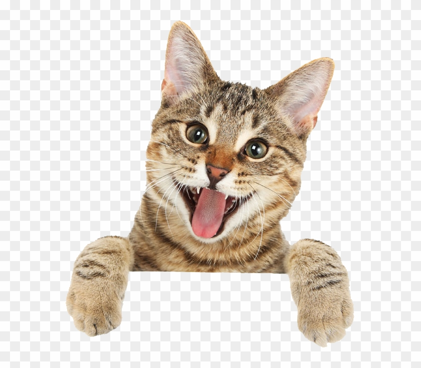 Cat Png Free Download.