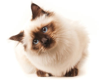 Cute Cat Png (108+ images in Collection) Page 2.