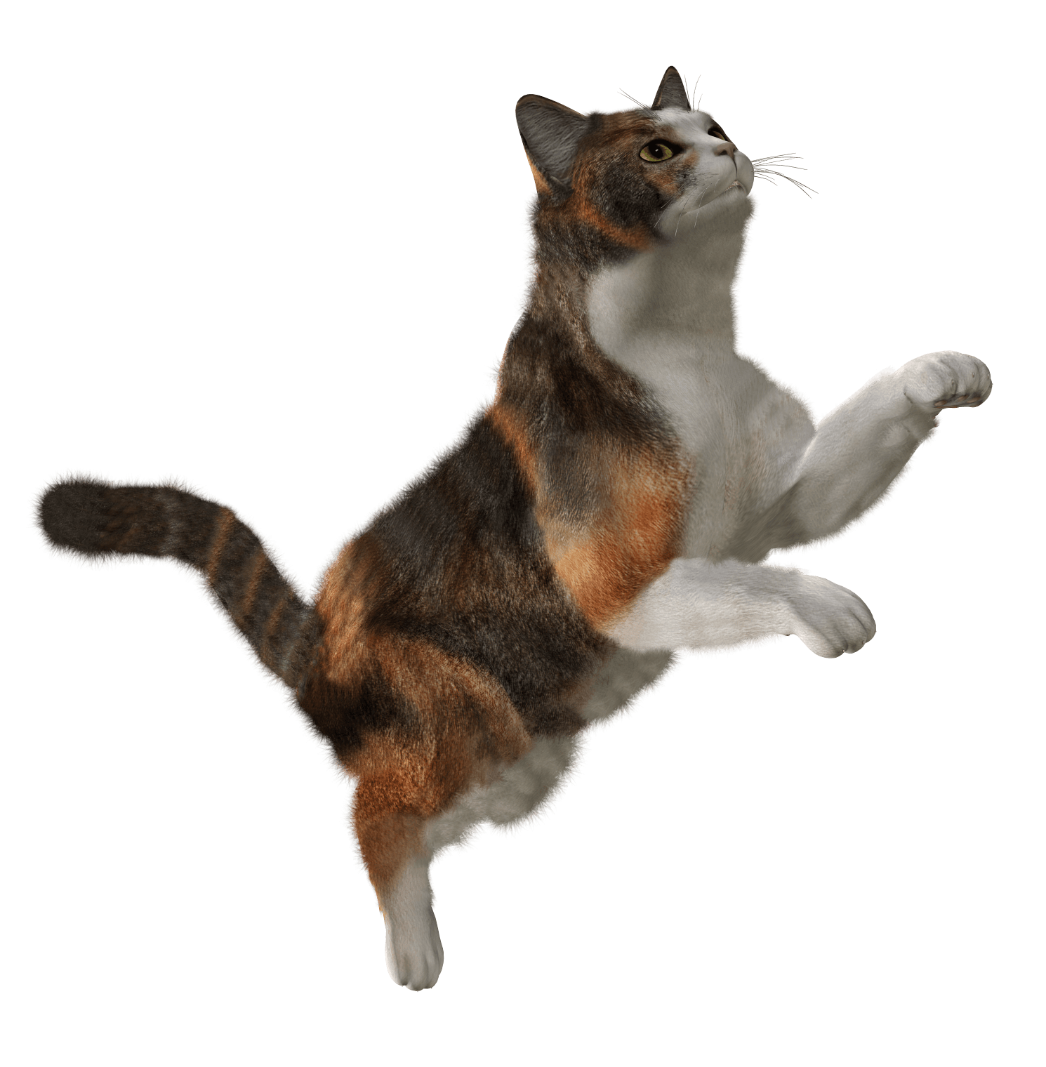Cute Cat Png Image Download Picture Kitten.