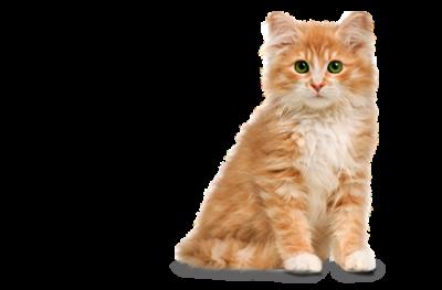 PNG Cute Cat Transparent Cute CatPNG Images.
