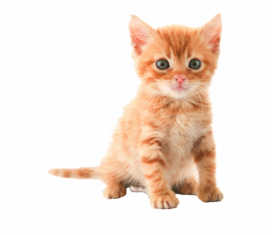 Png Hd Pictures Of Cats Pluspng.
