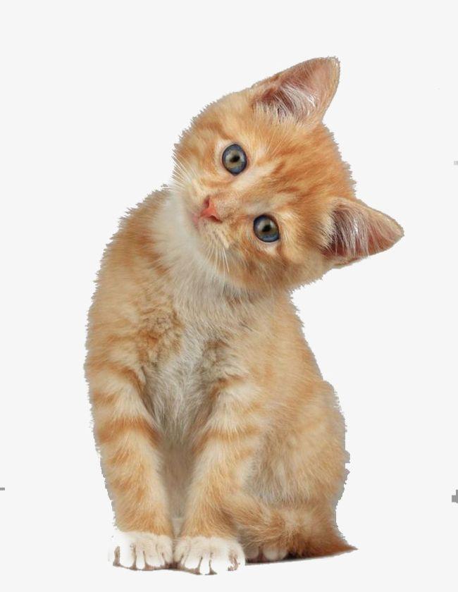 Creative Cute Cat Head Tilt PNG, Clipart, Animal, Cat, Cat Clipart.