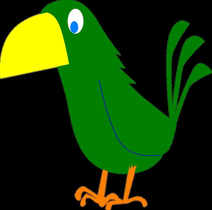 Bird, Claws.
