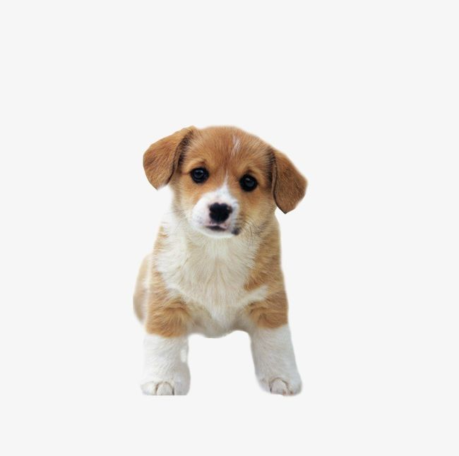 Dog PNG, Clipart, Cute, Dog, Dog Clipart, Dog Clipart, Lovely Free.