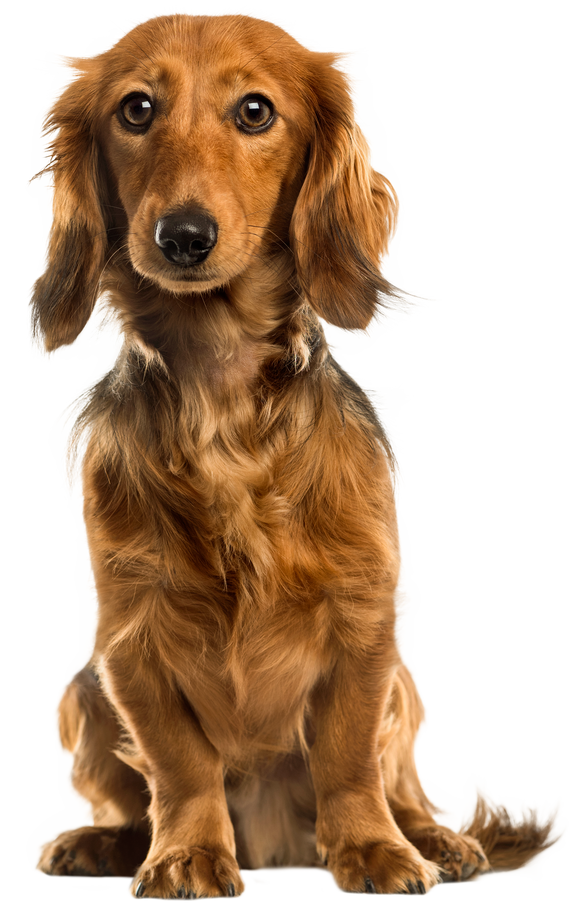 Cute Dog PNG Clip Art.