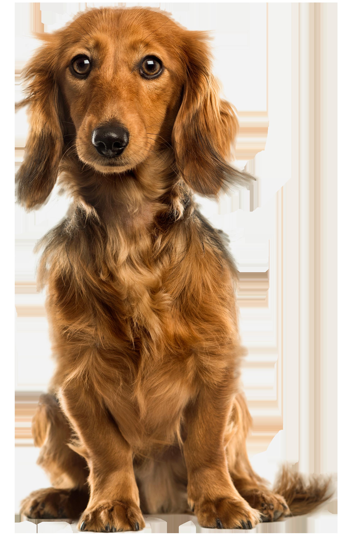 Cute Dog PNG Clip Art.