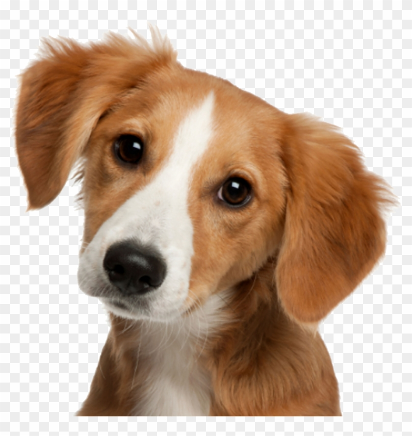 Cute Dog Png, Transparent Png.