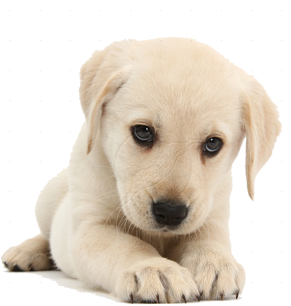 Cute Dog PNG HD Transparent Cute Dog HD.PNG Images..
