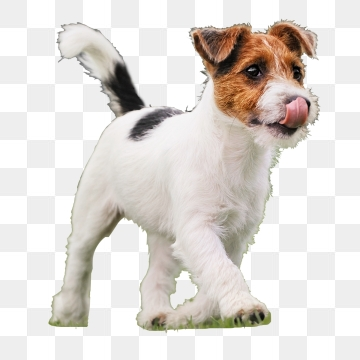 Dog PNG Images, Download 10,022 PNG Resources with Transparent.