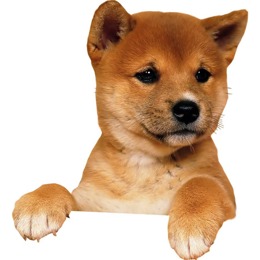 Dog png image, dogs, puppy pictures free download.