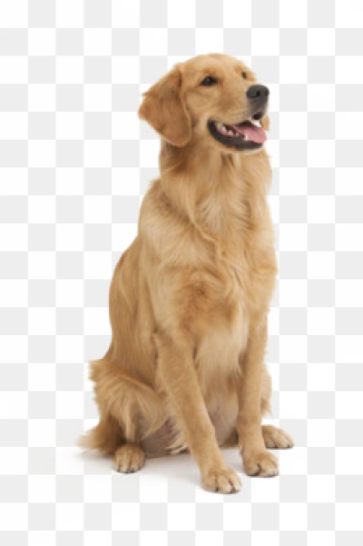 Cute Dog PNG Images.