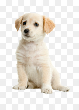 Puppy Cute Png & Free Puppy Cute.png Transparent Images #27908.