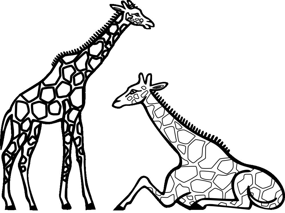 Drawing A Giraffe Clipart.