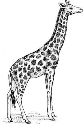 Giraffe Print Clipart.