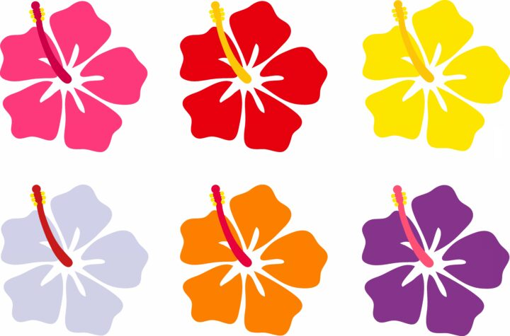 PNG Clipart Hawaiian Flowers Vector Healthy Jaswand Flower.