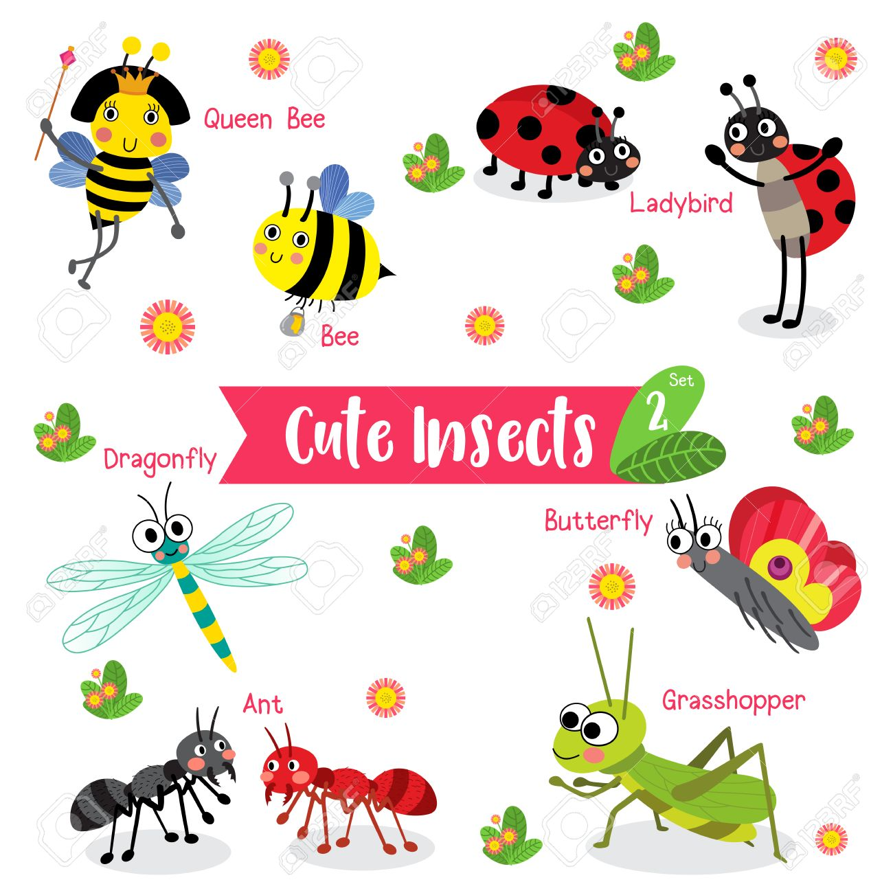 Cute Insects Animal cartoon on white background with animal name.