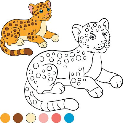 Coloring page with colors. Little cute baby jaguar. Clipart.